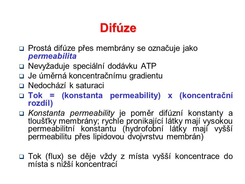 Difúze Prostá difúze přes membrány se označuje jako permeabilita