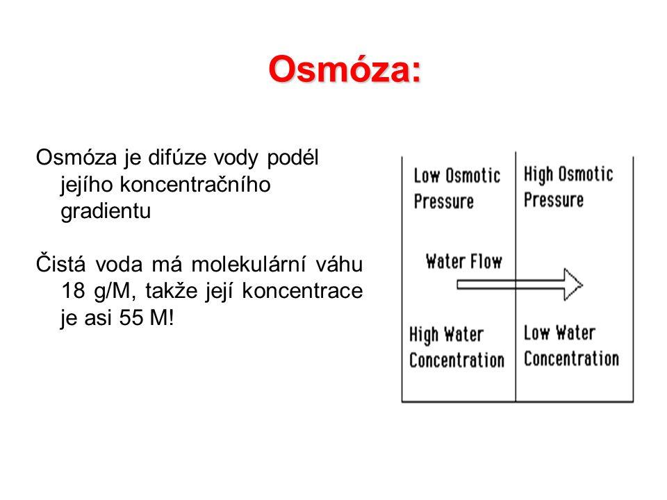 Osmóza: Osmóza je difúze vody podél jejího koncentračního gradientu