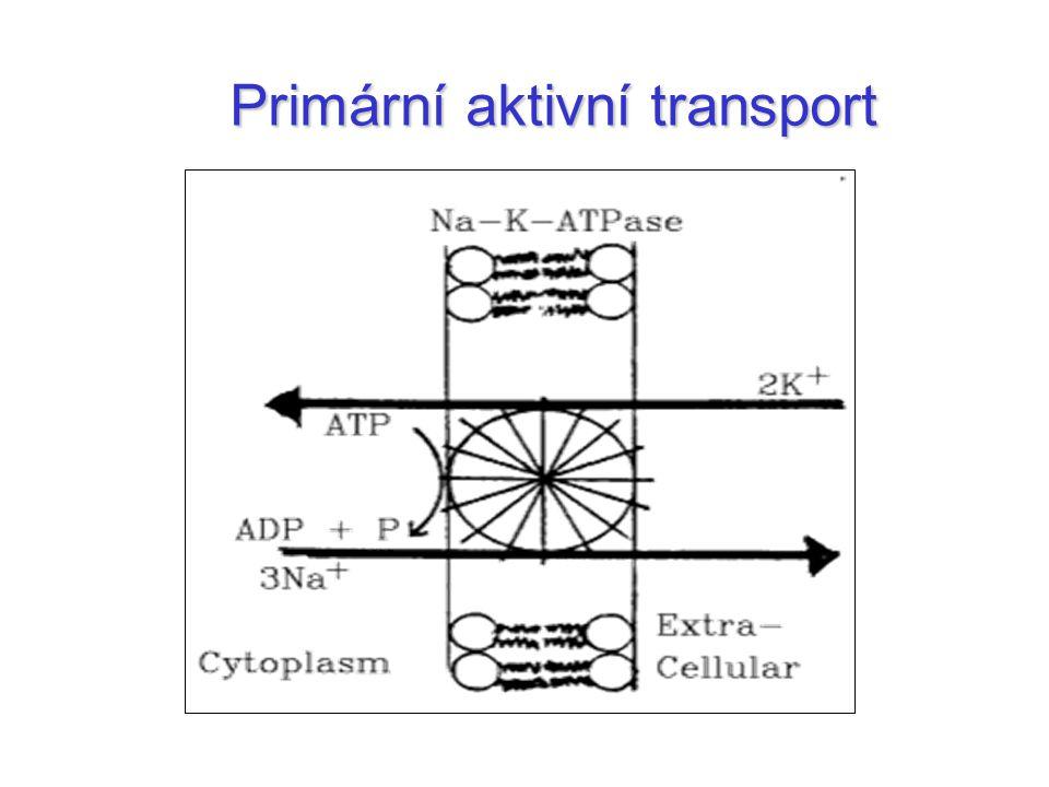 Primární aktivní transport