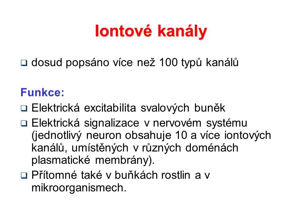 Iontové kanály dosud popsáno více než 100 typů kanálů Funkce: