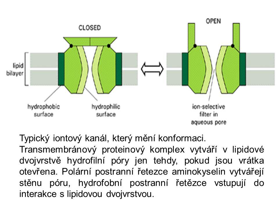 Typický iontový kanál, který mění konformaci.