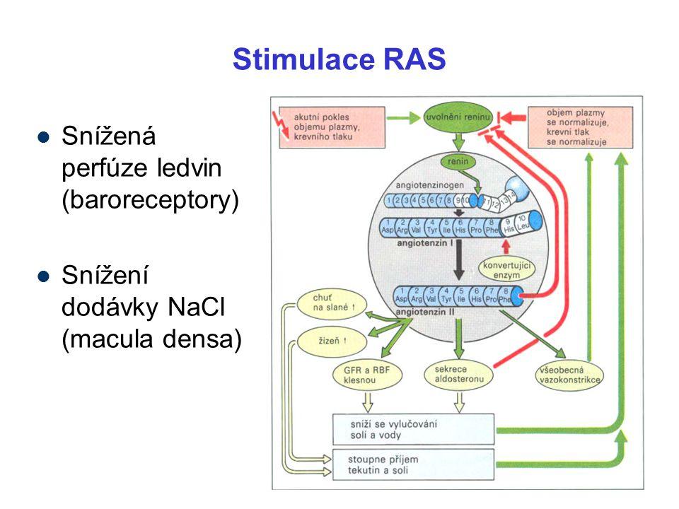 Stimulace RAS Snížená perfúze ledvin (baroreceptory)
