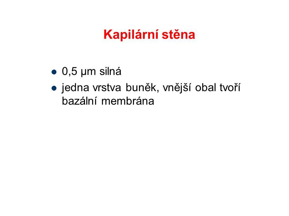 Kapilární stěna 0,5 μm silná