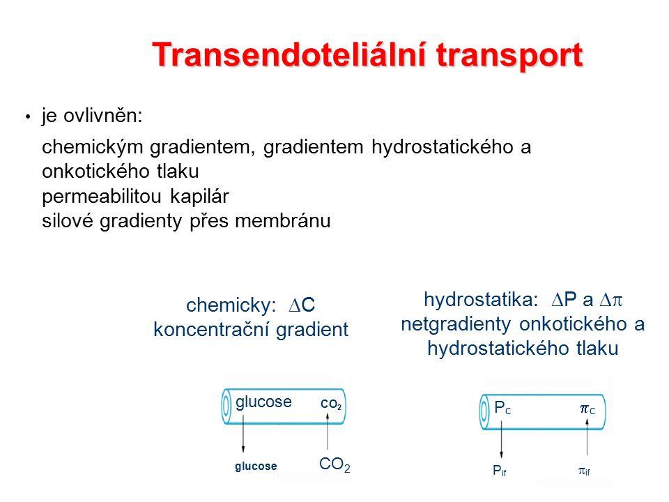 Transendoteliální transport