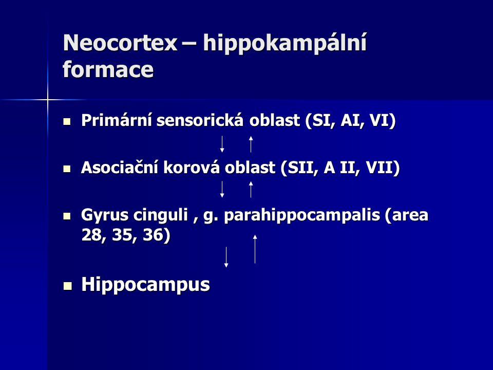 Neocortex – hippokampální formace