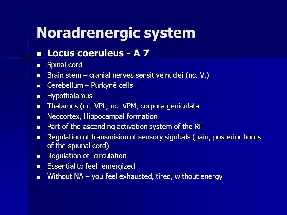 Noradrenergic system Locus coeruleus - A 7 Spinal cord