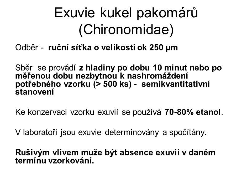 Exuvie kukel pakomárů (Chironomidae)