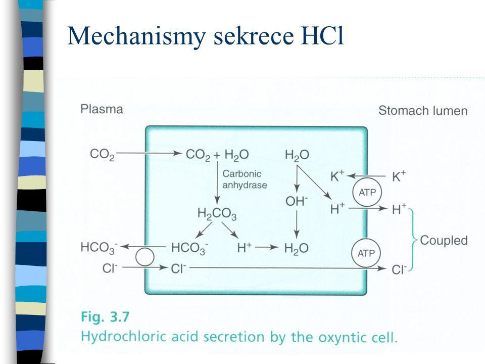 Mechanismy sekrece HCl