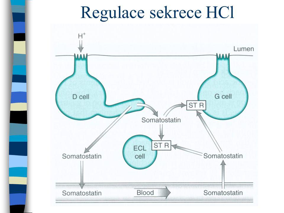 Regulace sekrece HCl