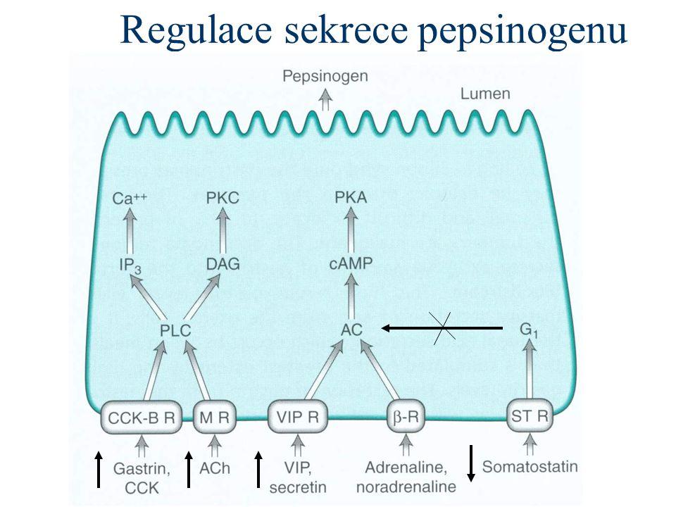 Regulace sekrece pepsinogenu