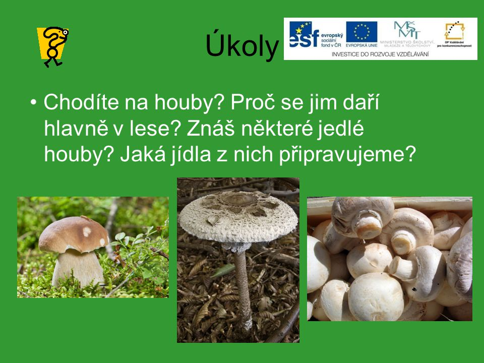 Úkoly Chodíte na houby. Proč se jim daří hlavně v lese.
