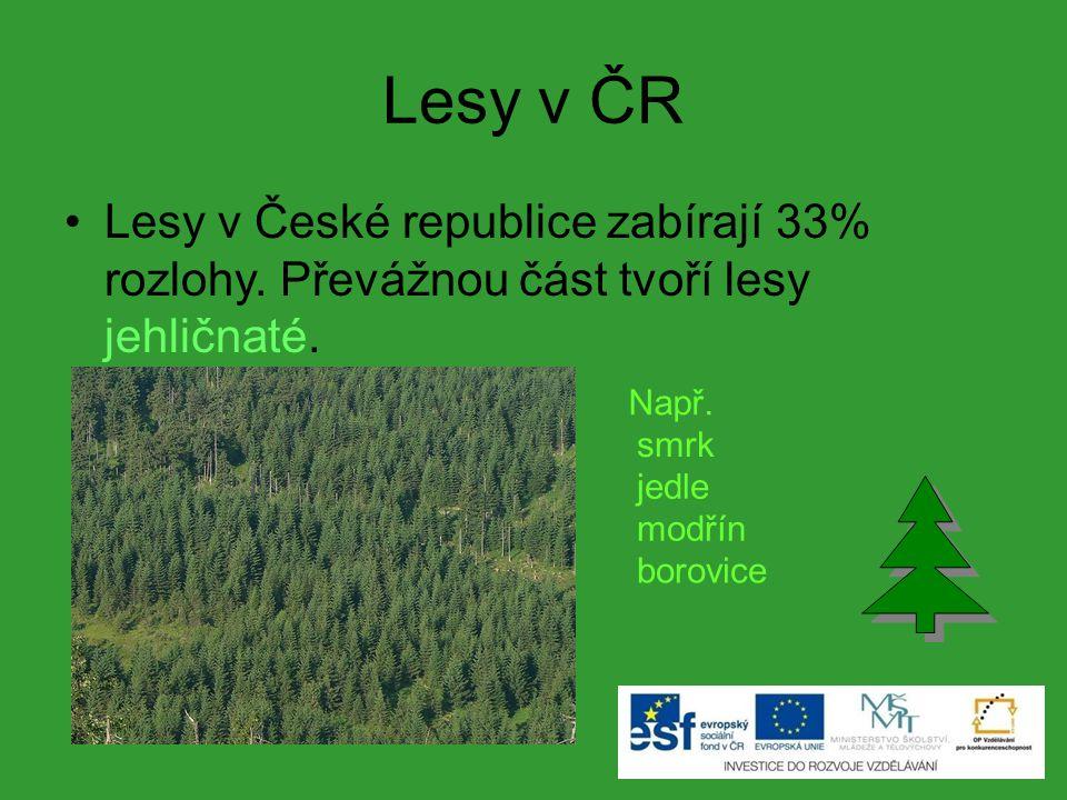 Lesy v ČR Lesy v České republice zabírají 33% rozlohy. Převážnou část tvoří lesy jehličnaté. Např.