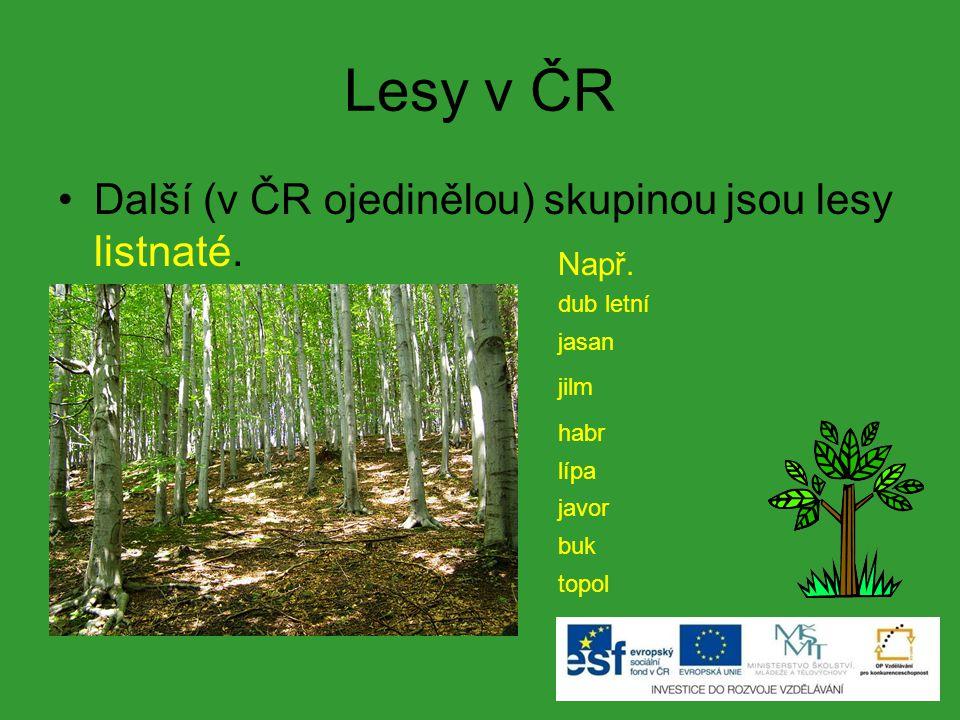 Lesy v ČR Další (v ČR ojedinělou) skupinou jsou lesy listnaté. Např.