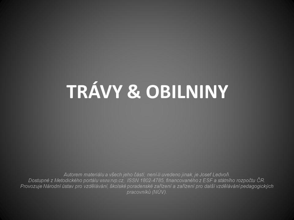 TRÁVY & OBILNINY Autorem materiálu a všech jeho částí, není-li uvedeno jinak, je Josef Ledvoň.