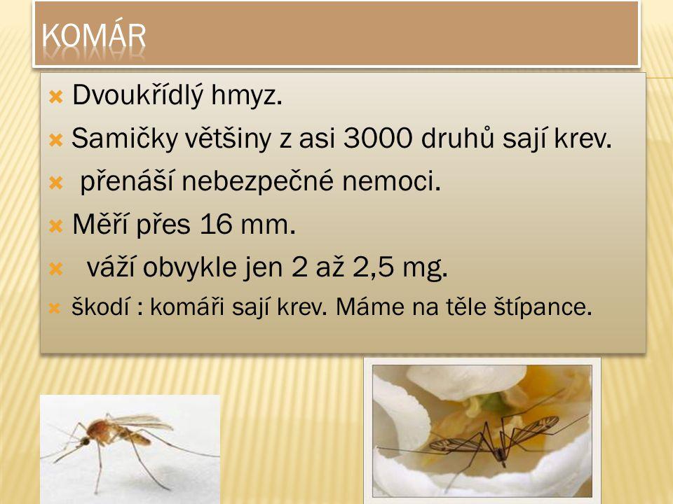 komár Dvoukřídlý hmyz. Samičky většiny z asi 3000 druhů sají krev.