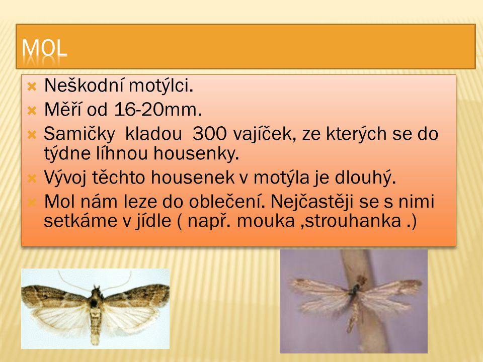 MOL Neškodní motýlci. Měří od 16-20mm.