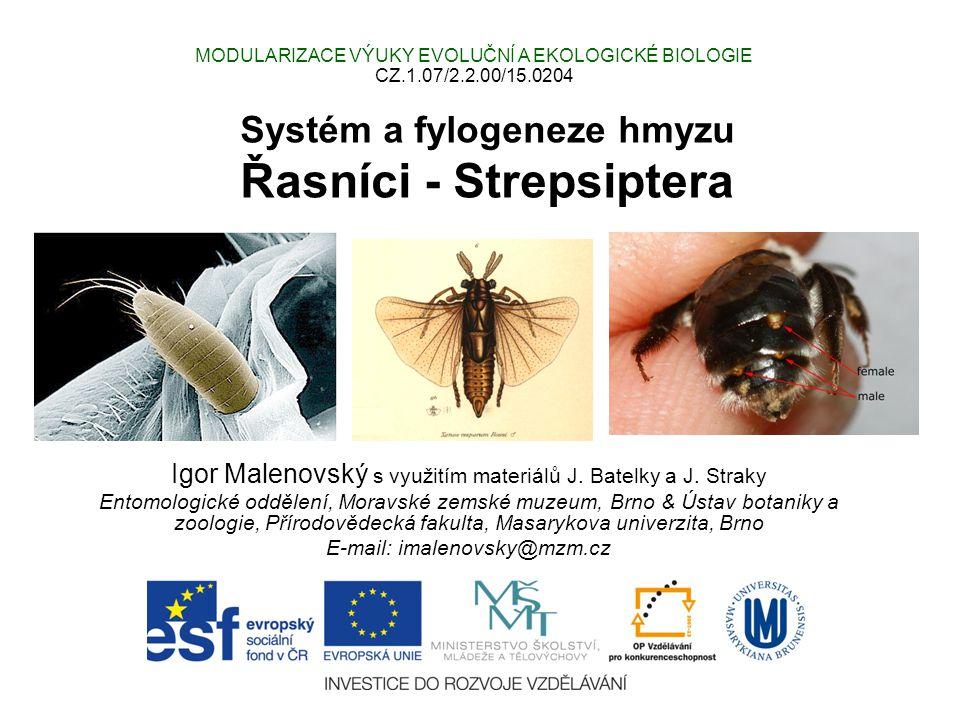 Systém a fylogeneze hmyzu Řasníci - Strepsiptera