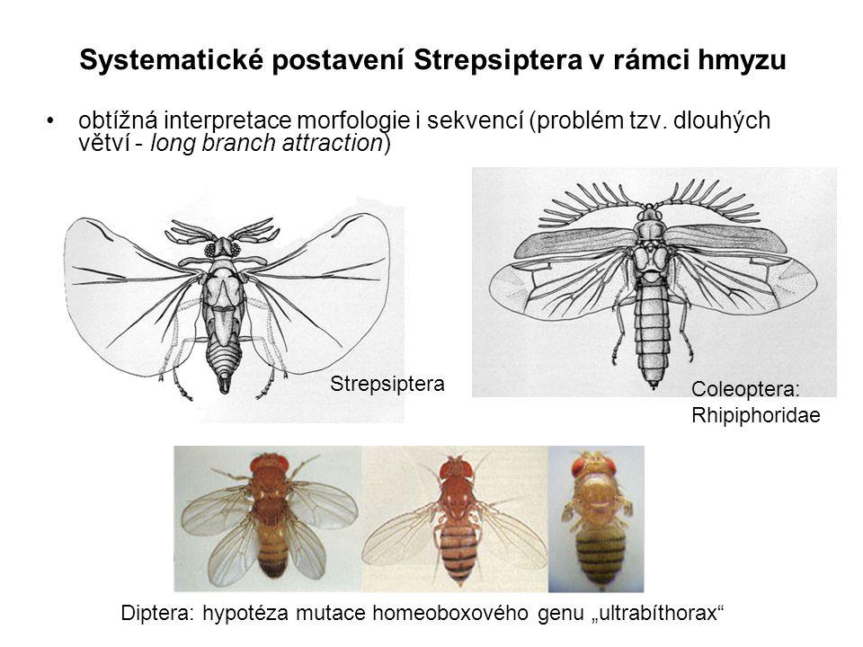 Systematické postavení Strepsiptera v rámci hmyzu