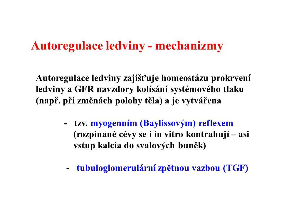 Autoregulace ledviny - mechanizmy