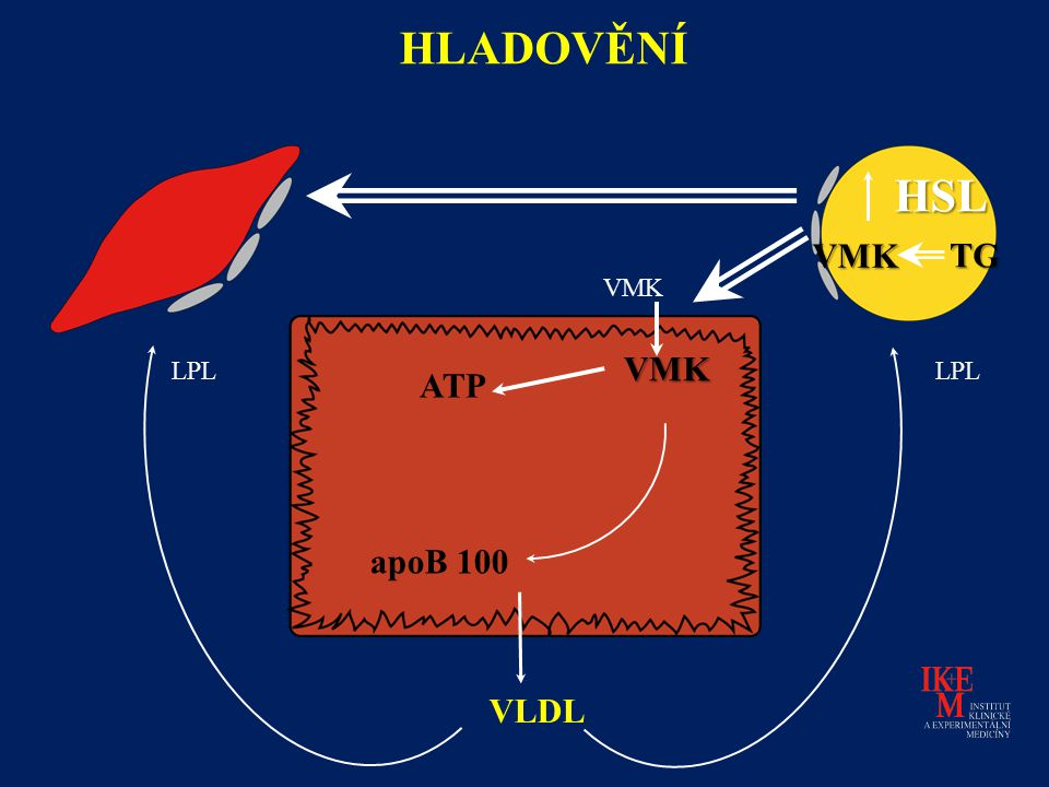 HLADOVĚNÍ HSL VMK TG VMK VMK LPL LPL ATP apoB 100 VLDL