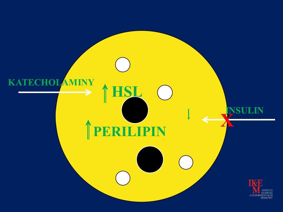 KATECHOLAMINY HSL INSULIN X PERILIPIN