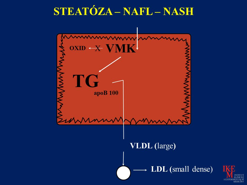 TG VMK STEATÓZA – NAFL – NASH X VLDL (large) LDL (small dense) OXID