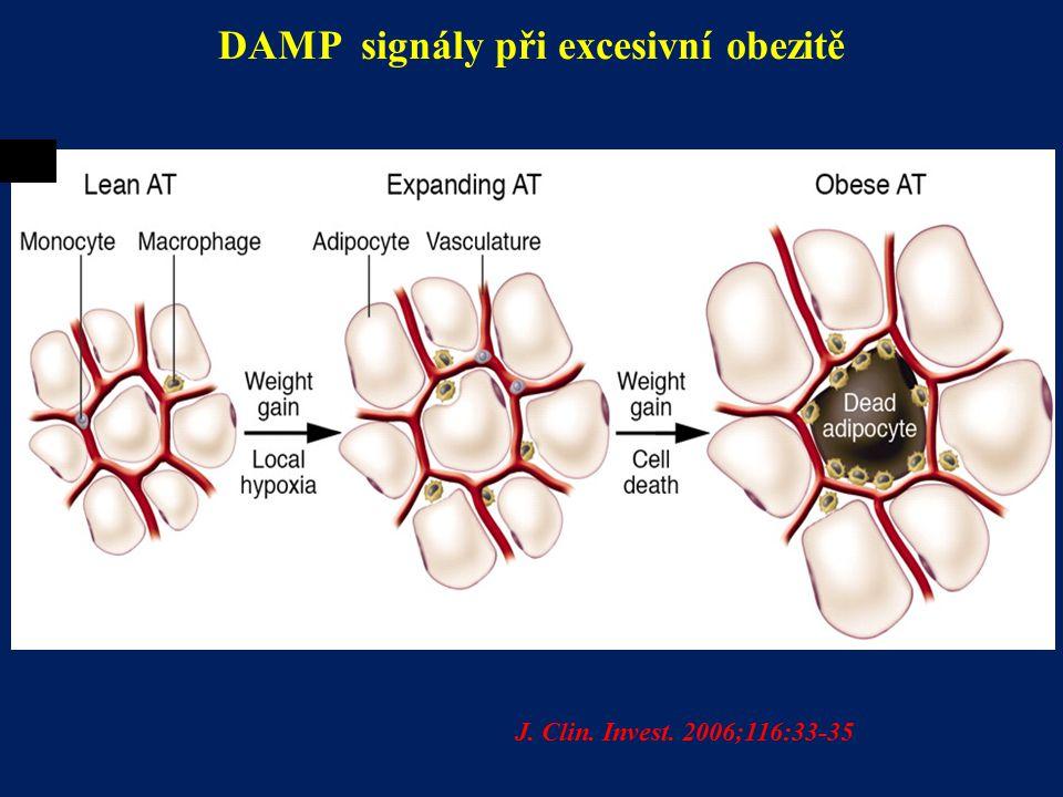 DAMP signály při excesivní obezitě