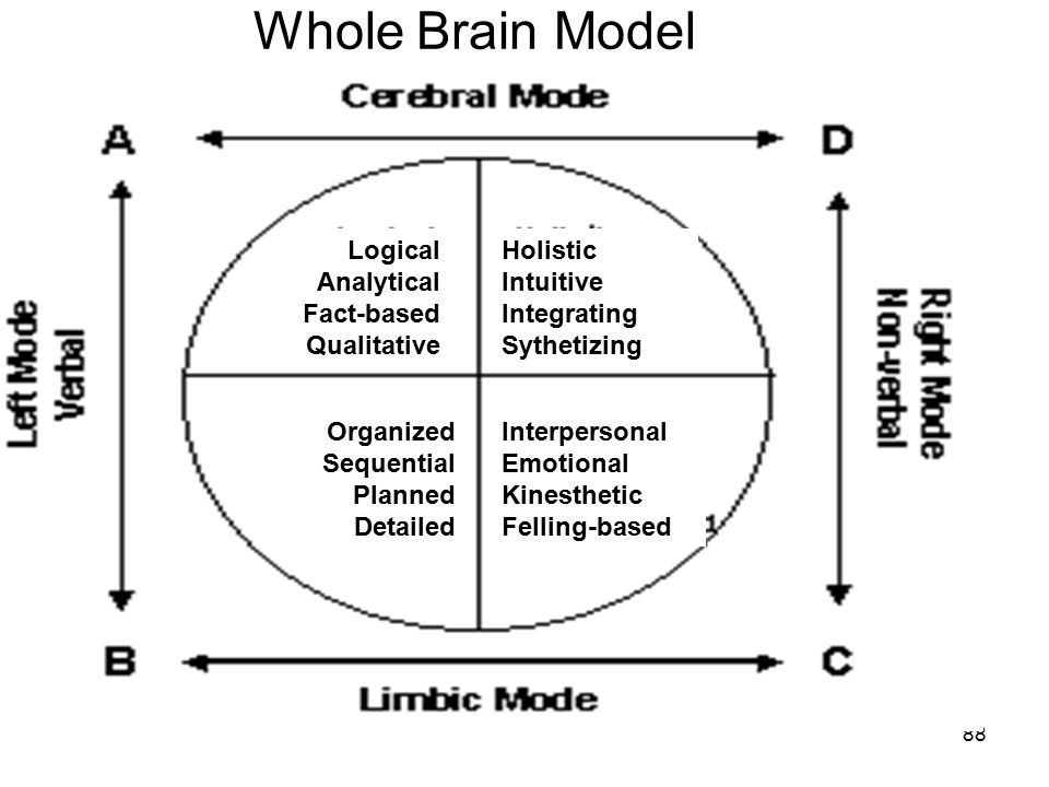 Whole Brain Model Logical Analytical Fact-based Qualitative