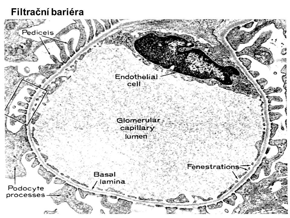 Filtrační bariéra