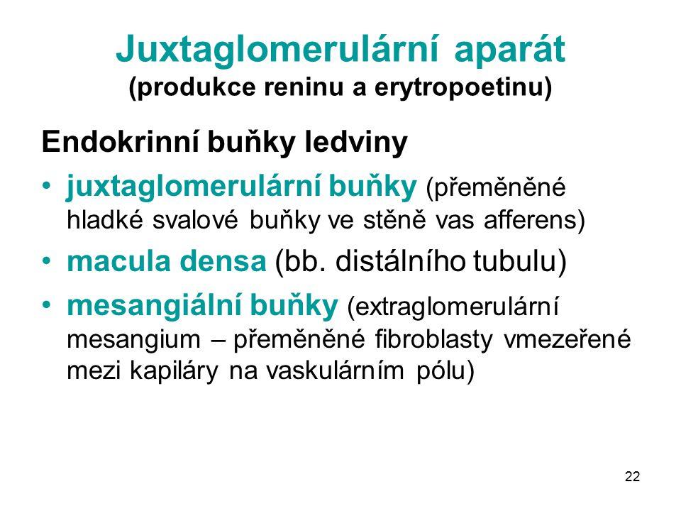 Juxtaglomerulární aparát (produkce reninu a erytropoetinu)