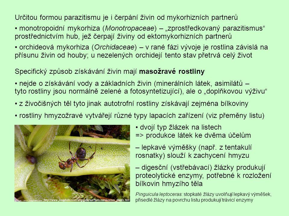 Určitou formou parazitismu je i čerpání živin od mykorhizních partnerů