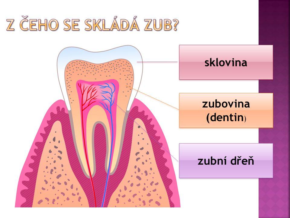 Z čeho se skládá zub sklovina zubovina (dentin) zubní dřeň