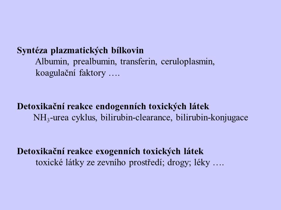 Syntéza plazmatických bílkovin
