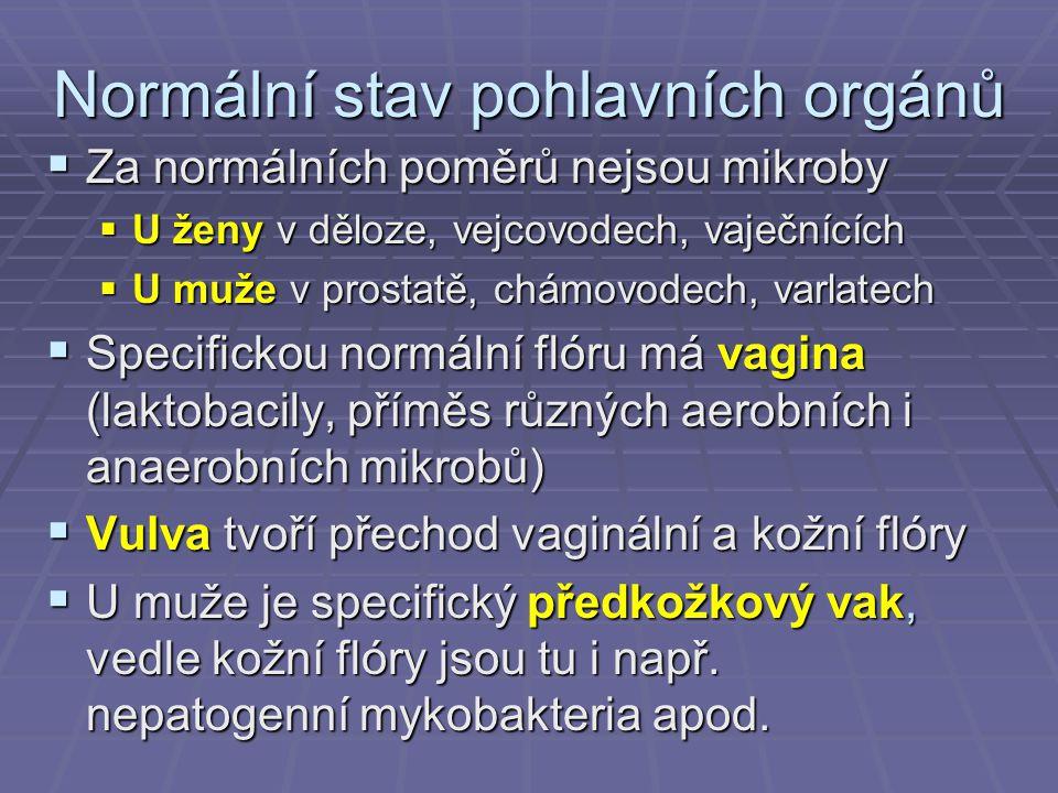 Normální stav pohlavních orgánů