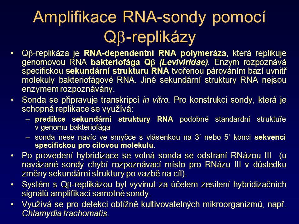 Amplifikace RNA-sondy pomocí Qb-replikázy