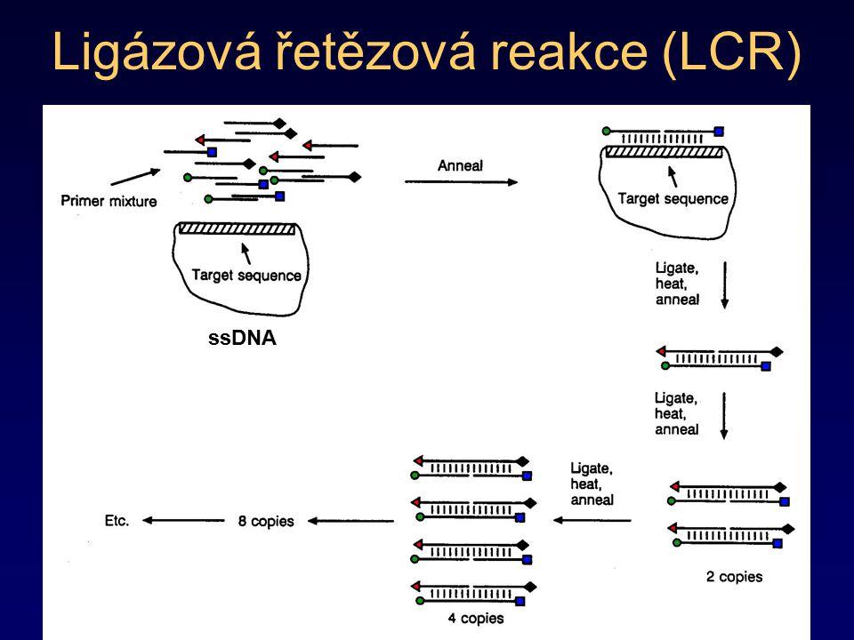 Ligázová řetězová reakce (LCR)