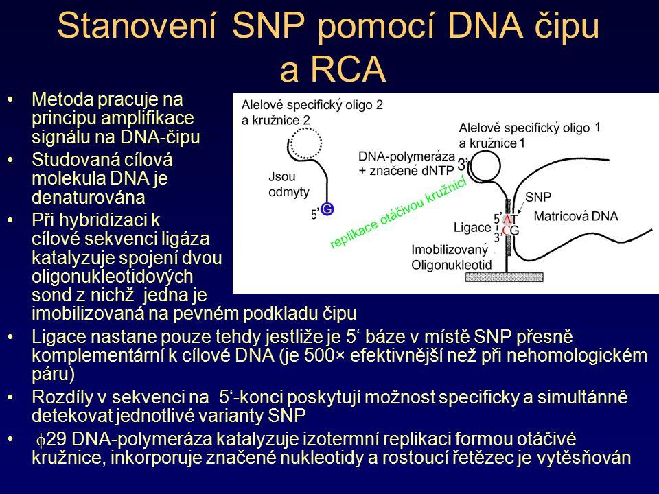 Stanovení SNP pomocí DNA čipu a RCA