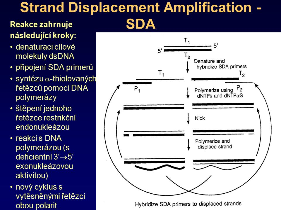 Strand Displacement Amplification - SDA