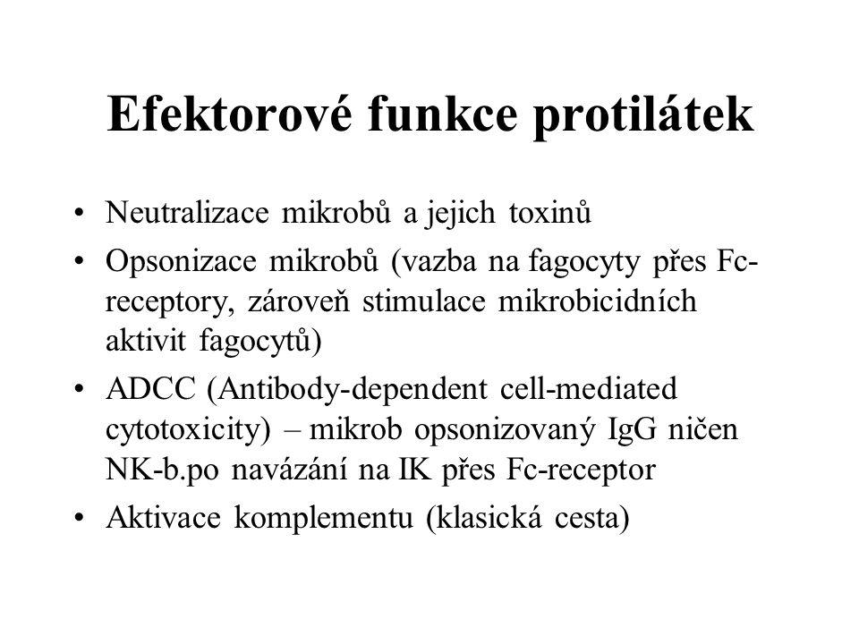 Efektorové funkce protilátek