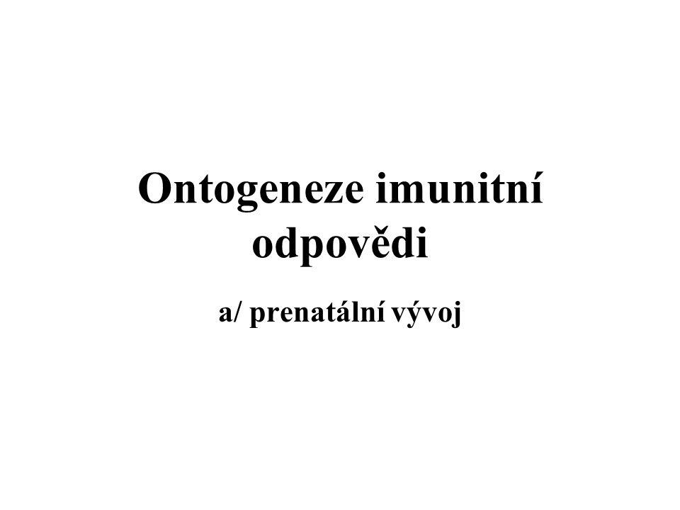 Ontogeneze imunitní odpovědi