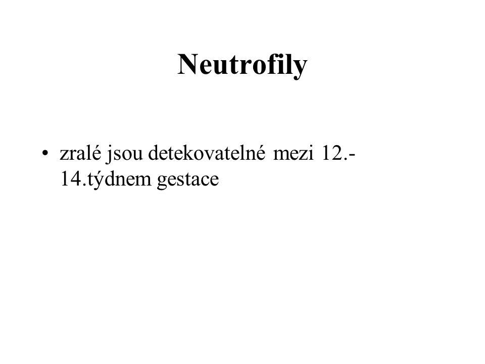 Neutrofily zralé jsou detekovatelné mezi 12.-14.týdnem gestace