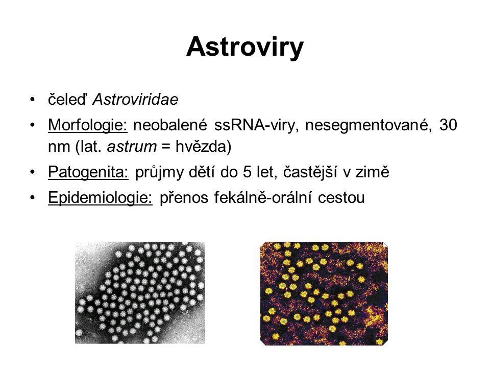Astroviry čeleď Astroviridae