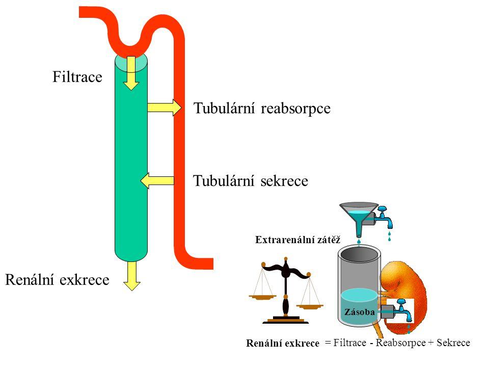 Filtrace Tubulární reabsorpce Tubulární sekrece Renální exkrece