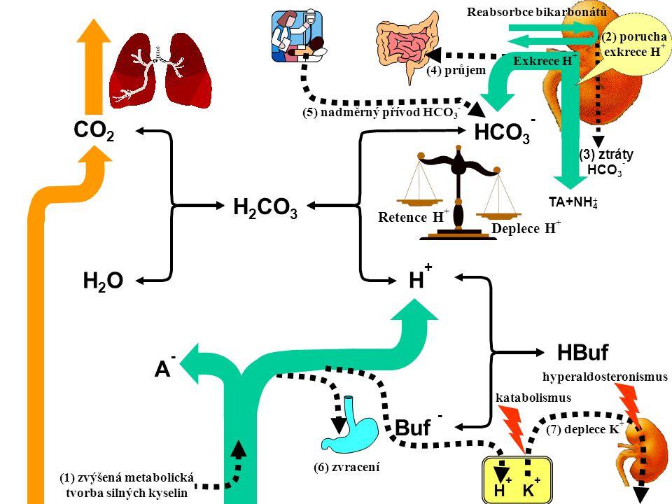 Reabsorbce bikarbonátů