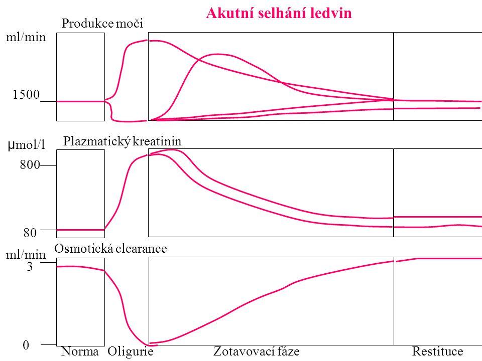 Plazmatický kreatinin