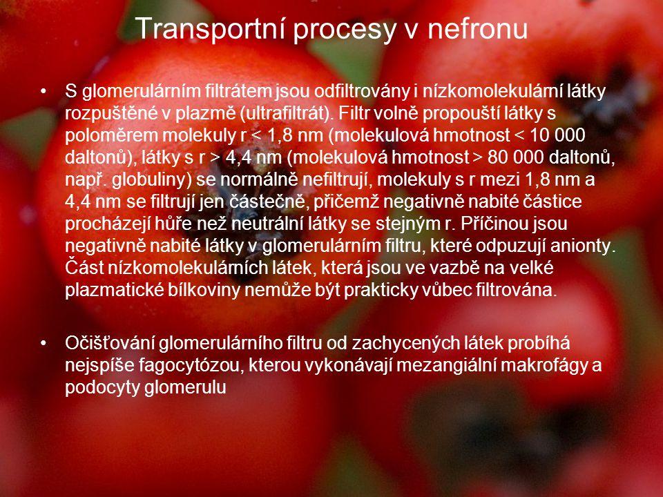 Transportní procesy v nefronu