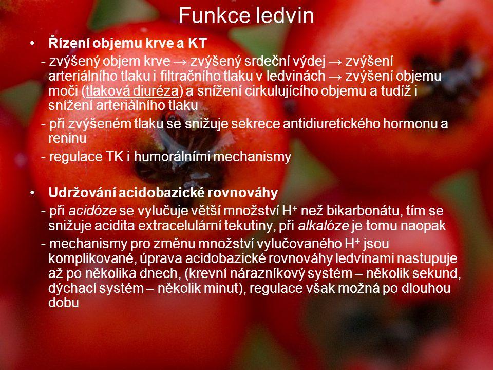 Funkce ledvin Řízení objemu krve a KT