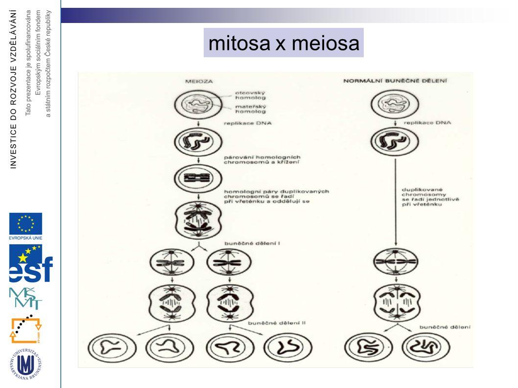 mitosa x meiosa