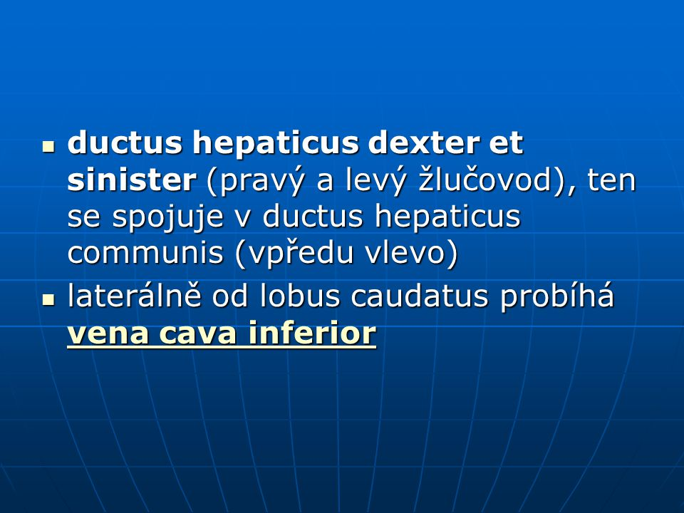 ductus hepaticus dexter et sinister (pravý a levý žlučovod), ten se spojuje v ductus hepaticus communis (vpředu vlevo)