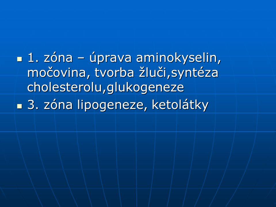 1. zóna – úprava aminokyselin, močovina, tvorba žluči,syntéza cholesterolu,glukogeneze
